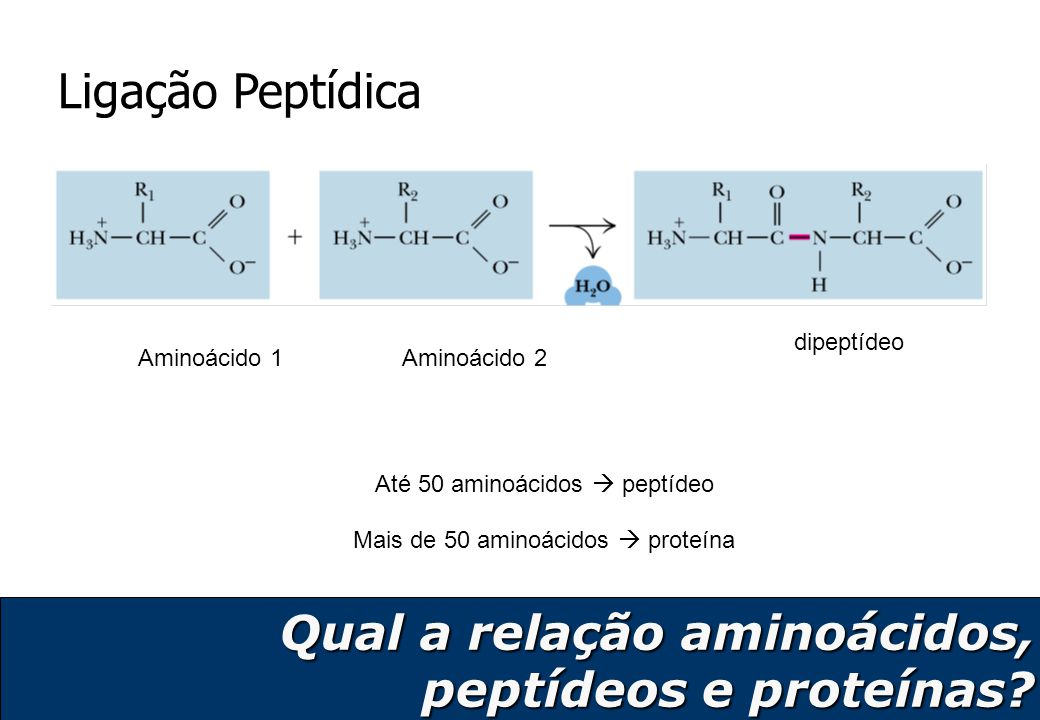 9 Ser–Gly–Tyr–Ala–Leu Qual a relação aminoácidos, peptídeos e proteínas?