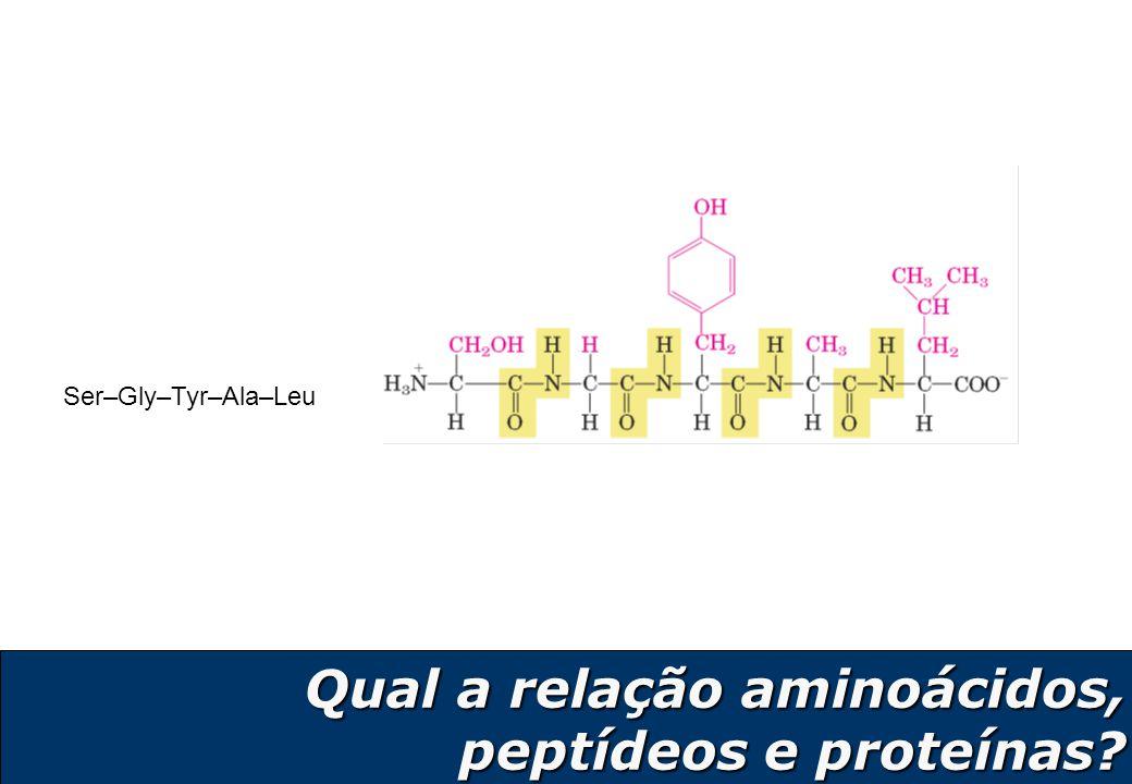10 Estrutura quaternária: Associação de mais de uma cadeia polipeptídica No modelo, um tetrâmero composto de 4 cadeias polipeptídicas x 4 Estrutura terciária: Enovelamento de uma cadeia polipeptídica como um todo.
