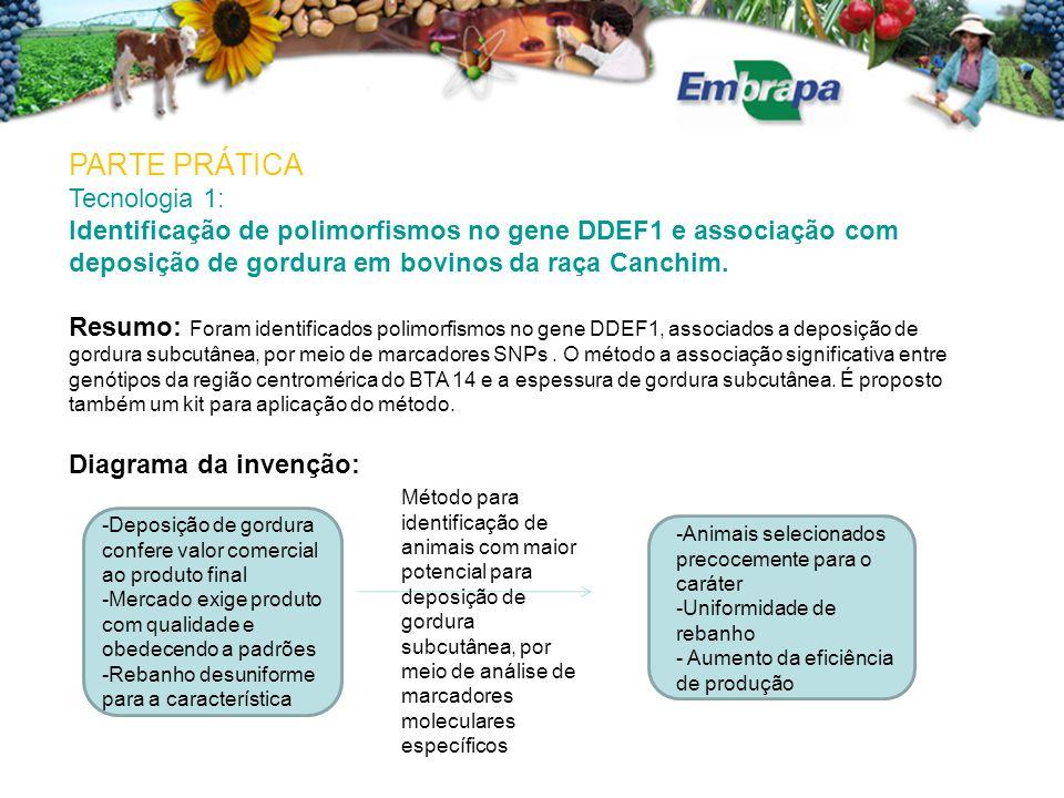 PARTE PRÁTICA Tecnologia 1: Identificação de polimorfismos no gene DDEF1 e associação com deposição de gordura em bovinos da raça Canchim.