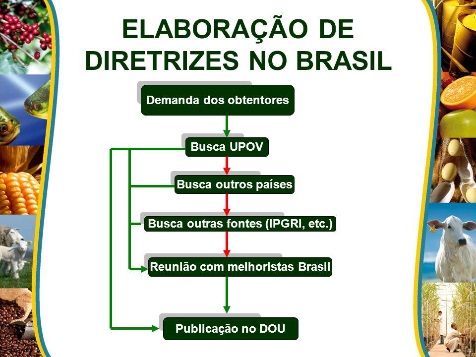 ELABORAÇÃO DE DIRETRIZES NO BRASIL Demanda dos obtentores Busca UPOV Busca outros países Busca outras fontes (IPGRI, etc.) Reunião com melhoristas Brasil Publicação no DOU
