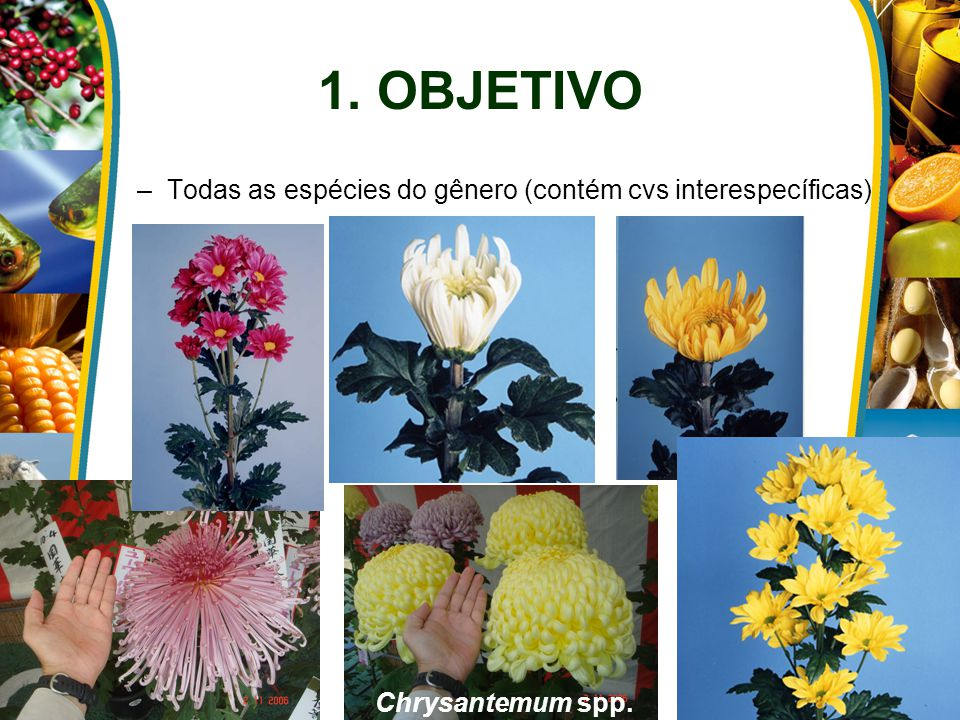 1. OBJETIVO –Todas as espécies do gênero (contém cvs interespecíficas) Chrysantemum spp.