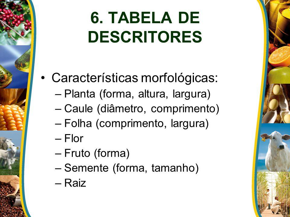 Características morfológicas: –Planta (forma, altura, largura) –Caule (diâmetro, comprimento) –Folha (comprimento, largura) –Flor –Fruto (forma) –Semente (forma, tamanho) –Raiz 6.
