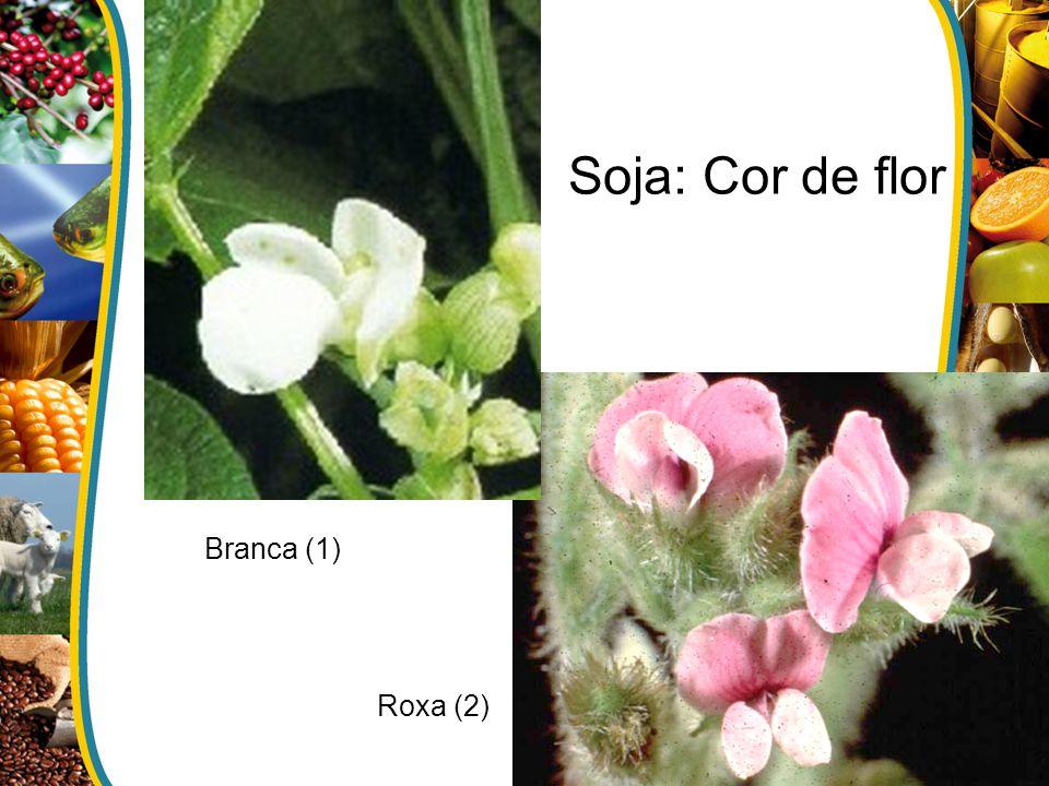 Branca (1) Roxa (2) Soja: Cor de flor