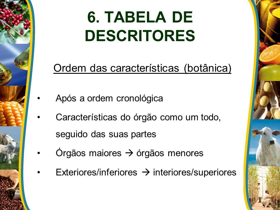 6. TABELA DE DESCRITORES Após a ordem cronológica Características do órgão como um todo, seguido das suas partes Órgãos maiores  órgãos menores Exter