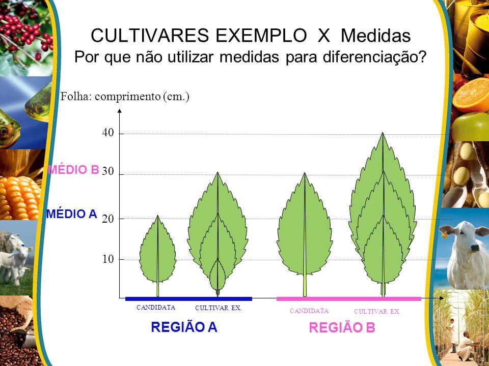 CULTIVARES EXEMPLO X Medidas Por que não utilizar medidas para diferenciação? Folha: comprimento (cm.) 40 30 20 10 MÉDIO A MÉDIO B REGIÃO A CULTIVAR E