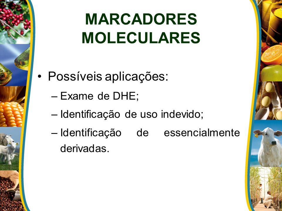 MARCADORES MOLECULARES Possíveis aplicações: –Exame de DHE; –Identificação de uso indevido; –Identificação de essencialmente derivadas.