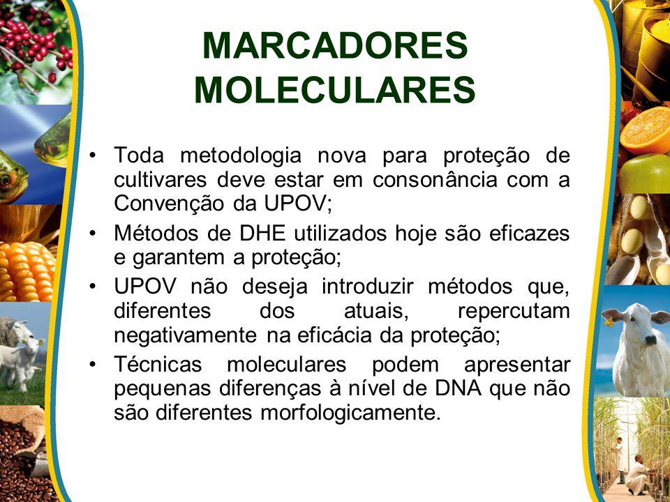 MARCADORES MOLECULARES Toda metodologia nova para proteção de cultivares deve estar em consonância com a Convenção da UPOV; Métodos de DHE utilizados