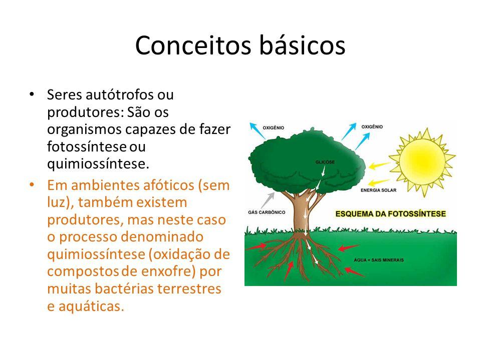 Conceitos básicos Seres autótrofos ou produtores: São os organismos capazes de fazer fotossíntese ou quimiossíntese. Em ambientes afóticos (sem luz),