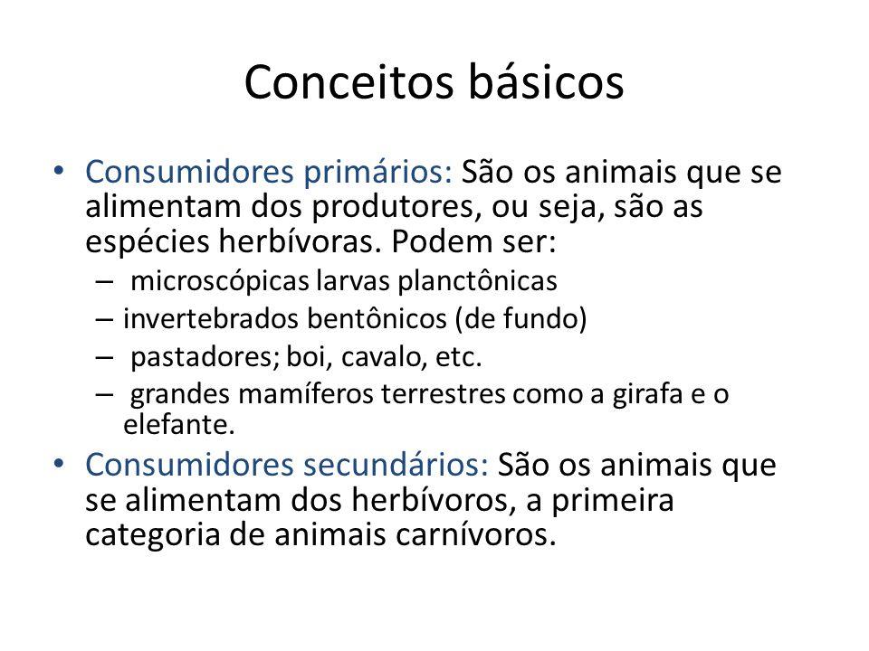 Conceitos básicos Consumidores primários: São os animais que se alimentam dos produtores, ou seja, são as espécies herbívoras. Podem ser: – microscópi