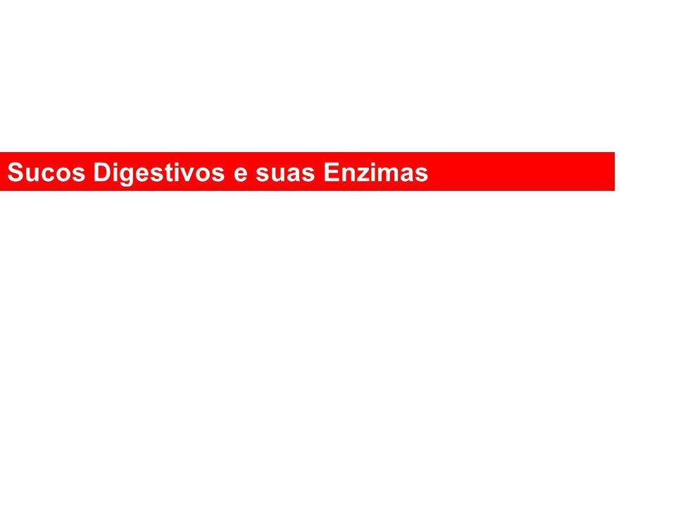 Sucos Digestivos e suas Enzimas