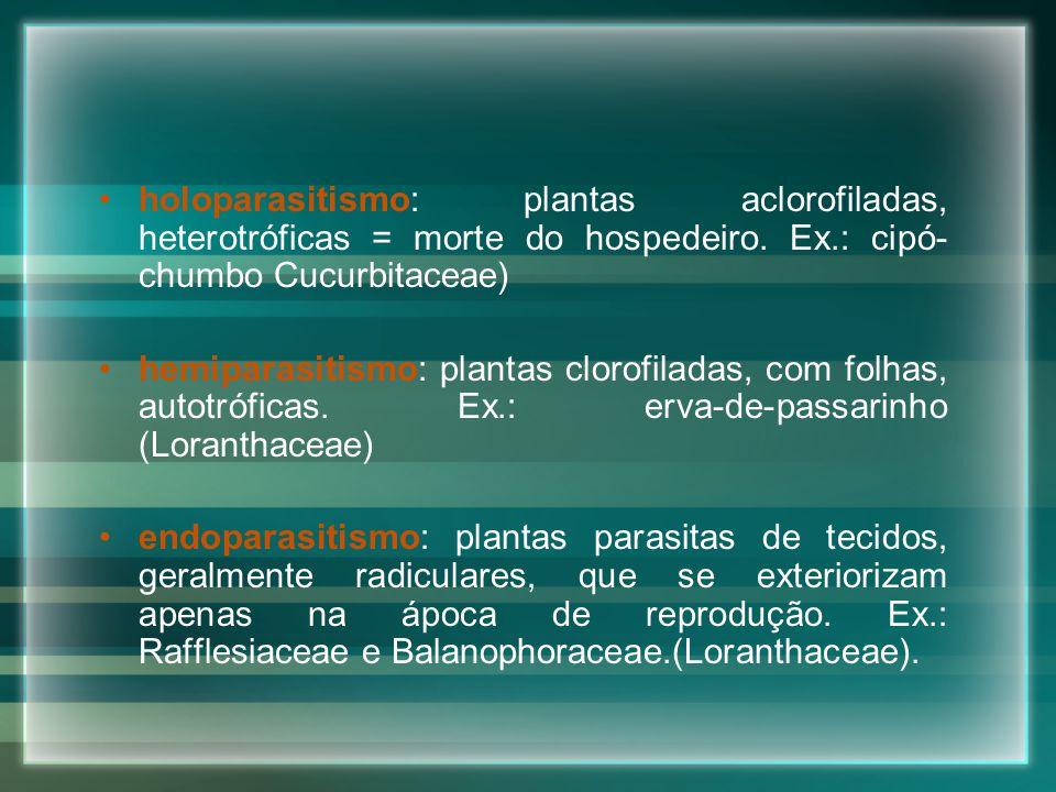 holoparasitismo: plantas aclorofiladas, heterotróficas = morte do hospedeiro. Ex.: cipó- chumbo Cucurbitaceae) hemiparasitismo: plantas clorofiladas,