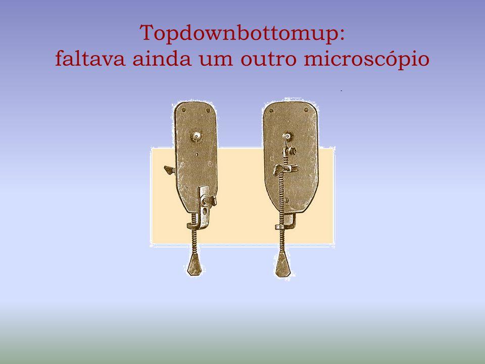 Topdownbottomup: faltava ainda um outro microscópio
