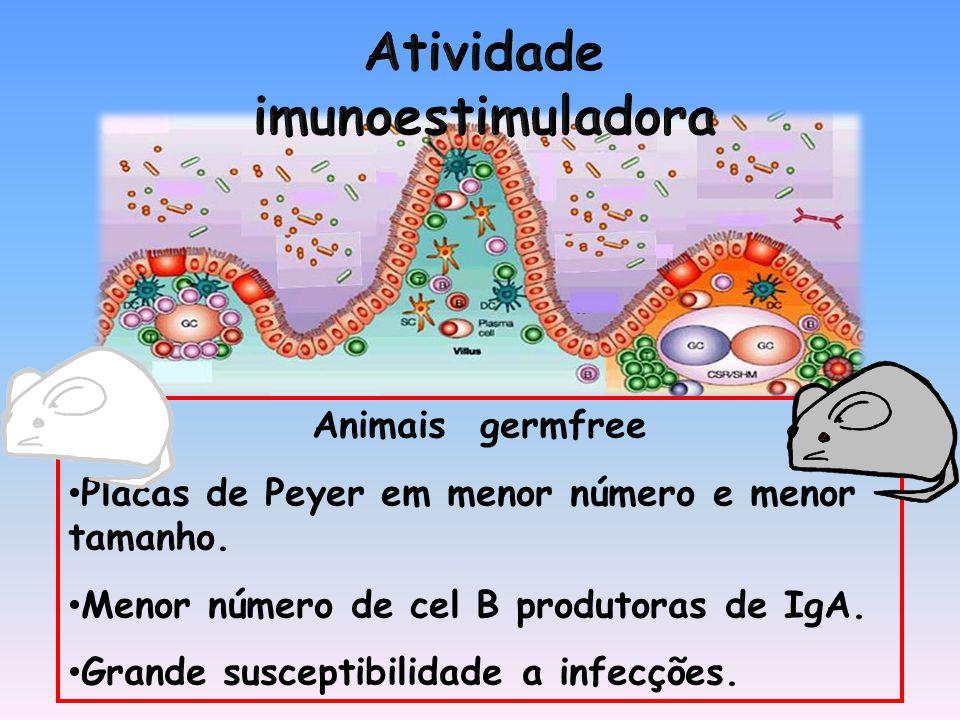 Animais germfree Placas de Peyer em menor número e menor tamanho.