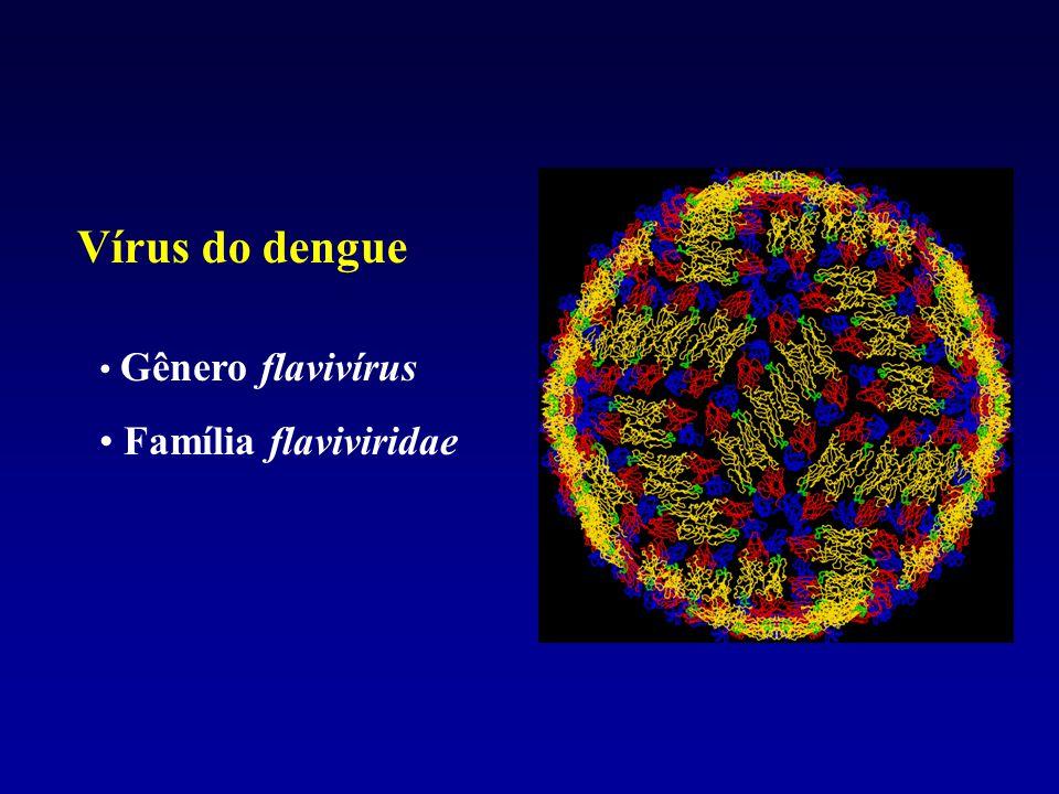 Vírus do dengue Gênero flavivírus Família flaviviridae