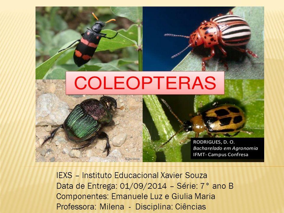  Ordem de insetos, besouros, gorgulhos e vaga- lumes; submetidos à metamorfose completa e possuidores de élitros - asas superiores que possuem uma parte, estojo, destinada ao ajuste das asas inferiores.