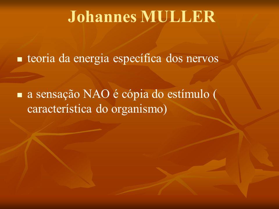Johannes MULLER teoria da energia específica dos nervos a sensação NAO é cópia do estímulo ( característica do organismo)