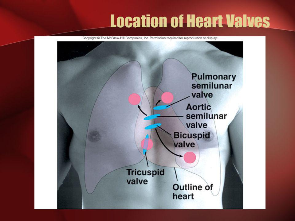 Location of Heart Valves