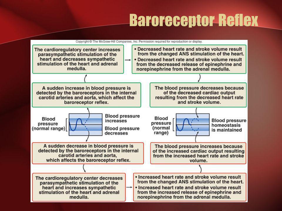 Baroreceptor Reflex