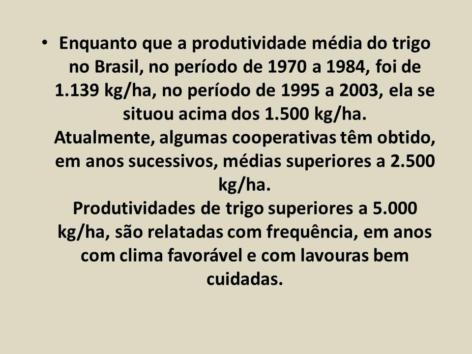 Enquanto que a produtividade média do trigo no Brasil, no período de 1970 a 1984, foi de 1.139 kg/ha, no período de 1995 a 2003, ela se situou acima d