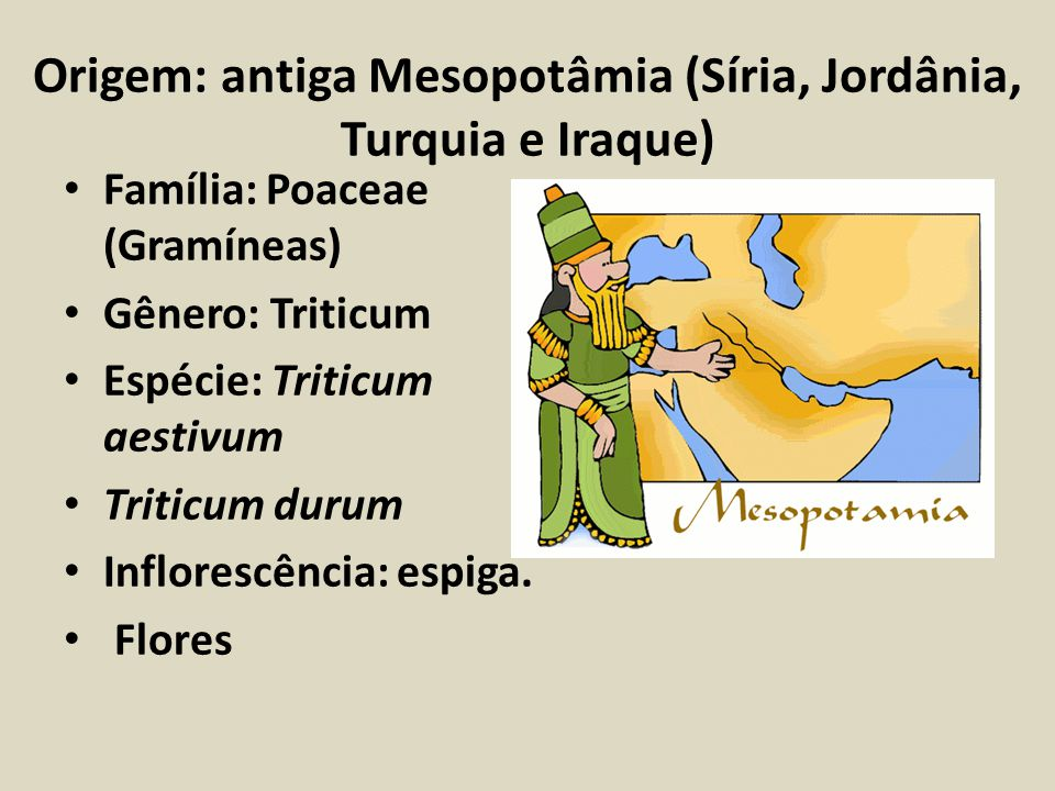 Origem: antiga Mesopotâmia (Síria, Jordânia, Turquia e Iraque) Família: Poaceae (Gramíneas) Gênero: Triticum Espécie: Triticum aestivum Triticum durum