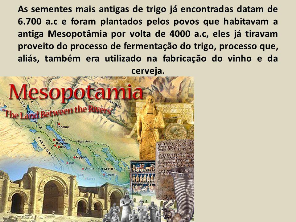 As sementes mais antigas de trigo já encontradas datam de 6.700 a.c e foram plantados pelos povos que habitavam a antiga Mesopotâmia por volta de 4000