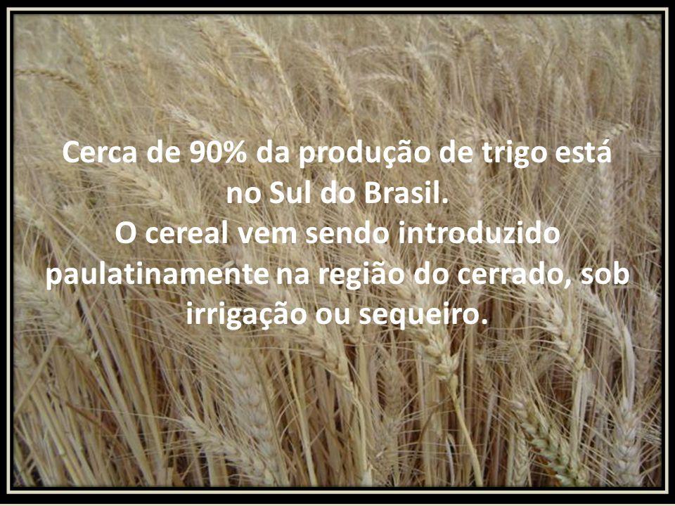 Cerca de 90% da produção de trigo está no Sul do Brasil. O cereal vem sendo introduzido paulatinamente na região do cerrado, sob irrigação ou sequeiro