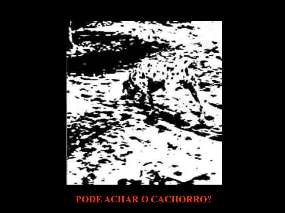 PODE ACHAR O CACHORRO?