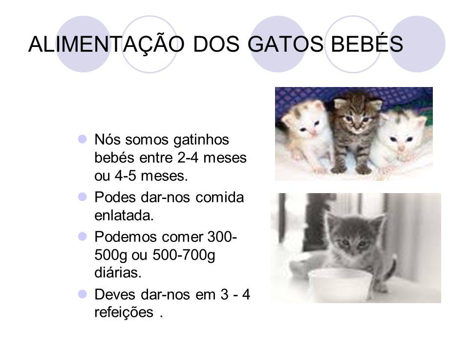 ALIMENTAÇÃO DOS GATOS BEBÉS Nós somos gatinhos bebés entre 2-4 meses ou 4-5 meses. Podes dar-nos comida enlatada. Podemos comer 300- 500g ou 500-700g