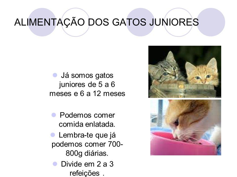 ALIMENTAÇÃO DOS GATOS JUNIORES Já somos gatos juniores de 5 a 6 meses e 6 a 12 meses Podemos comer comida enlatada. Lembra-te que já podemos comer 700