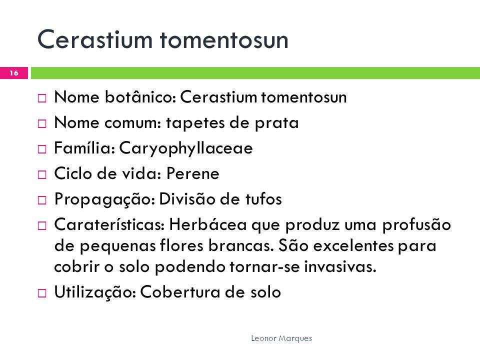 Cerastium tomentosun  Nome botânico: Cerastium tomentosun  Nome comum: tapetes de prata  Família: Caryophyllaceae  Ciclo de vida: Perene  Propagação: Divisão de tufos  Caraterísticas: Herbácea que produz uma profusão de pequenas flores brancas.