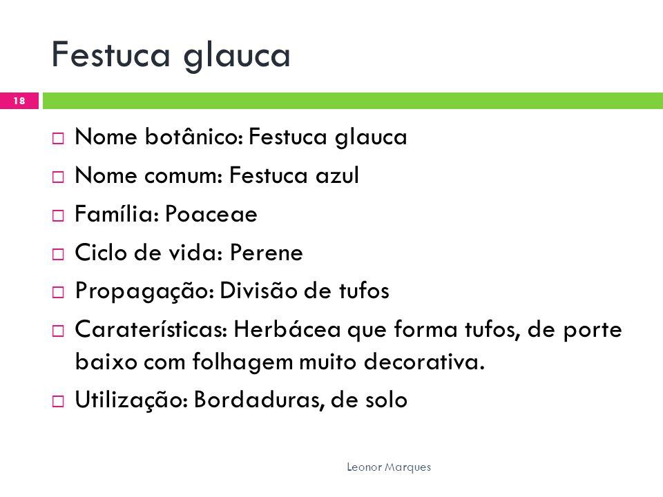 Festuca glauca  Nome botânico: Festuca glauca  Nome comum: Festuca azul  Família: Poaceae  Ciclo de vida: Perene  Propagação: Divisão de tufos 