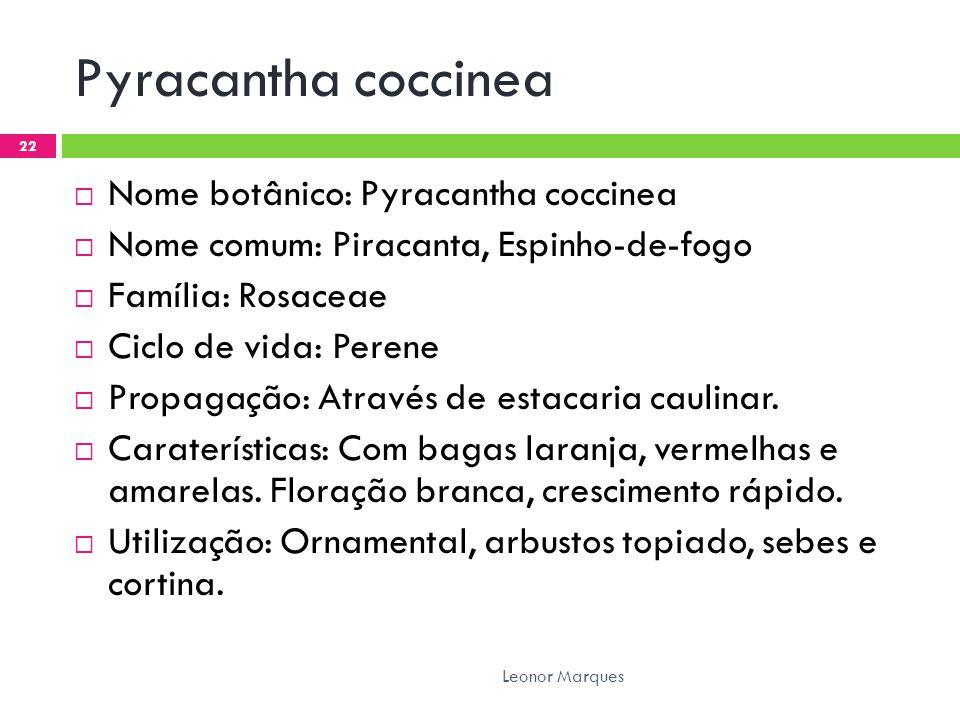 Pyracantha coccinea  Nome botânico: Pyracantha coccinea  Nome comum: Piracanta, Espinho-de-fogo  Família: Rosaceae  Ciclo de vida: Perene  Propagação: Através de estacaria caulinar.