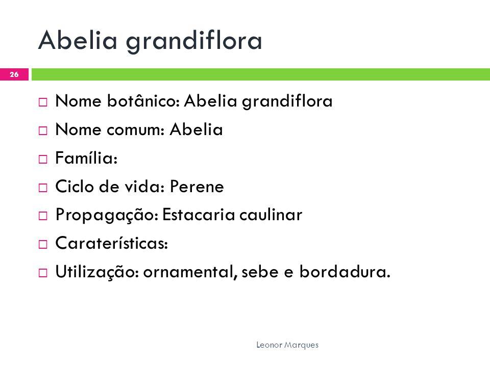 Abelia grandiflora  Nome botânico: Abelia grandiflora  Nome comum: Abelia  Família:  Ciclo de vida: Perene  Propagação: Estacaria caulinar  Caraterísticas:  Utilização: ornamental, sebe e bordadura.
