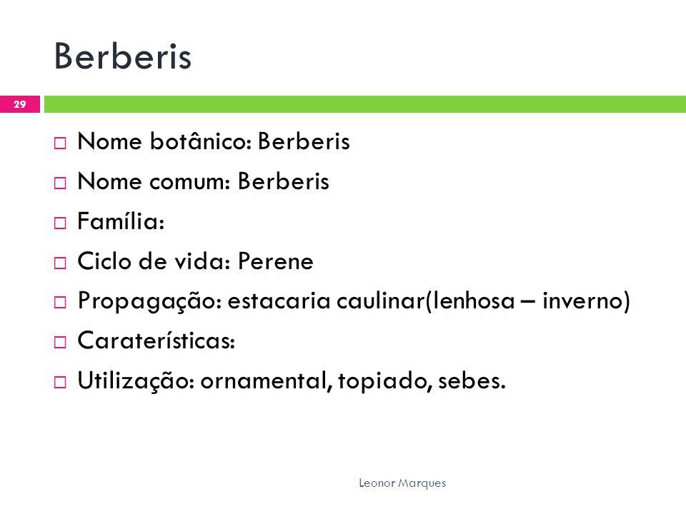 Berberis  Nome botânico: Berberis  Nome comum: Berberis  Família:  Ciclo de vida: Perene  Propagação: estacaria caulinar(lenhosa – inverno)  Caraterísticas:  Utilização: ornamental, topiado, sebes.