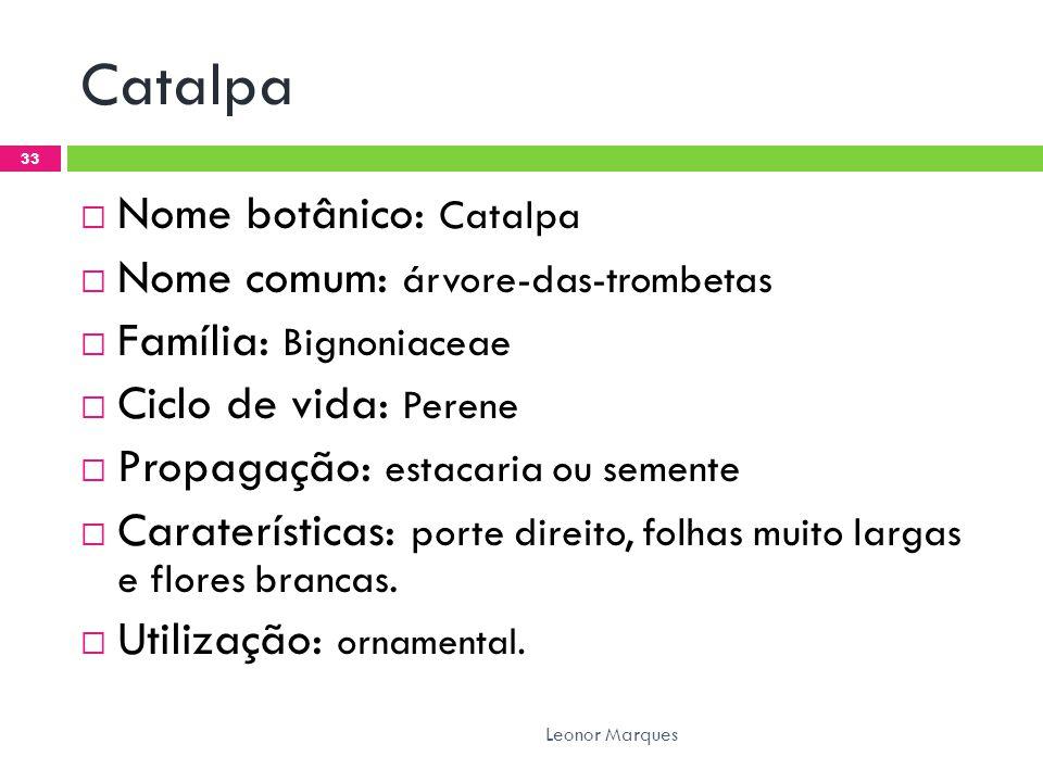 Catalpa  Nome botânico: Catalpa  Nome comum: árvore-das-trombetas  Família: Bignoniaceae  Ciclo de vida: Perene  Propagação: estacaria ou semente  Caraterísticas: porte direito, folhas muito largas e flores brancas.