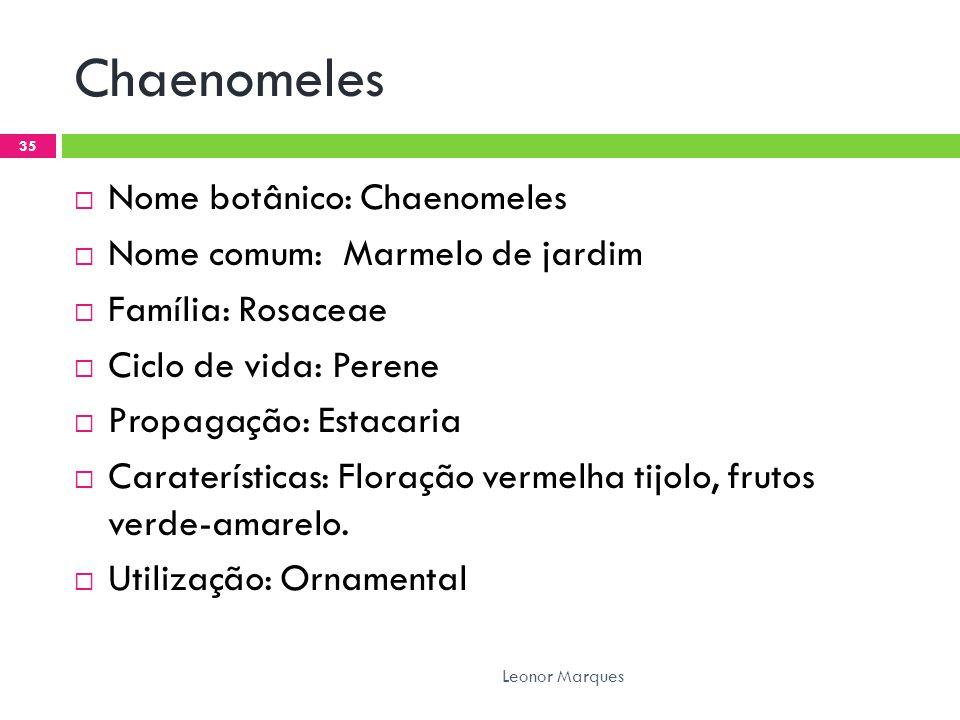 Chaenomeles  Nome botânico: Chaenomeles  Nome comum: Marmelo de jardim  Família: Rosaceae  Ciclo de vida: Perene  Propagação: Estacaria  Caraterísticas: Floração vermelha tijolo, frutos verde-amarelo.