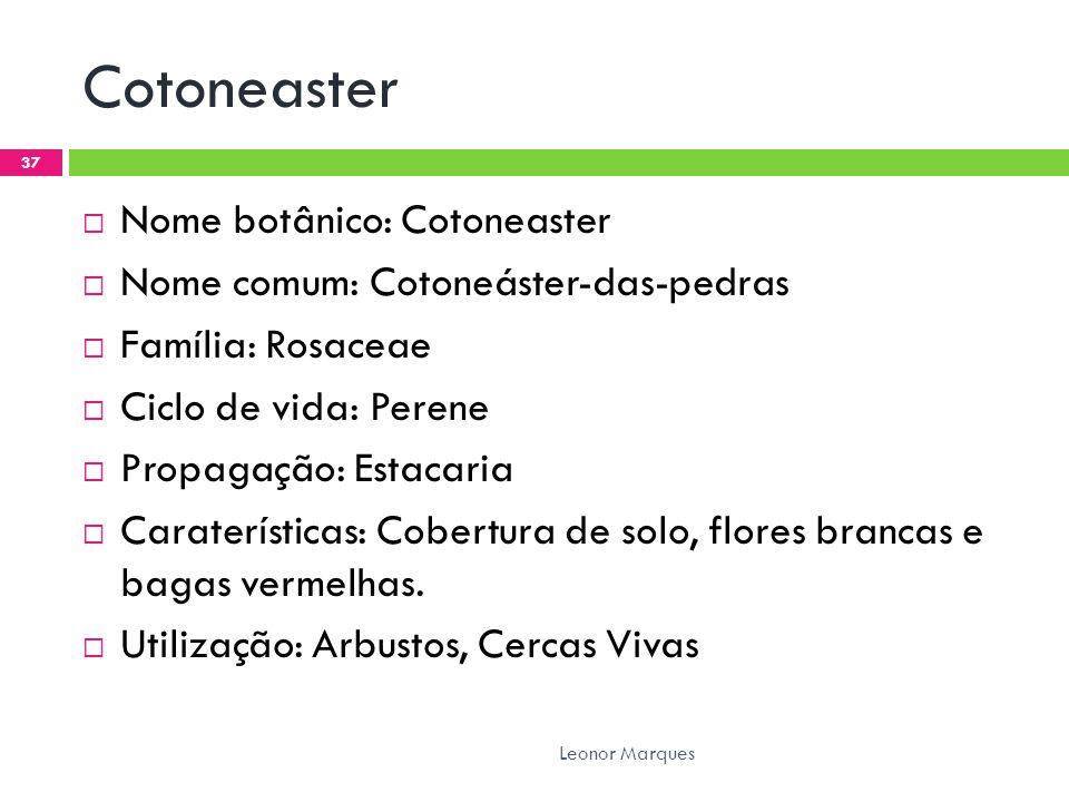 Cotoneaster  Nome botânico: Cotoneaster  Nome comum: Cotoneáster-das-pedras  Família: Rosaceae  Ciclo de vida: Perene  Propagação: Estacaria  Caraterísticas: Cobertura de solo, flores brancas e bagas vermelhas.