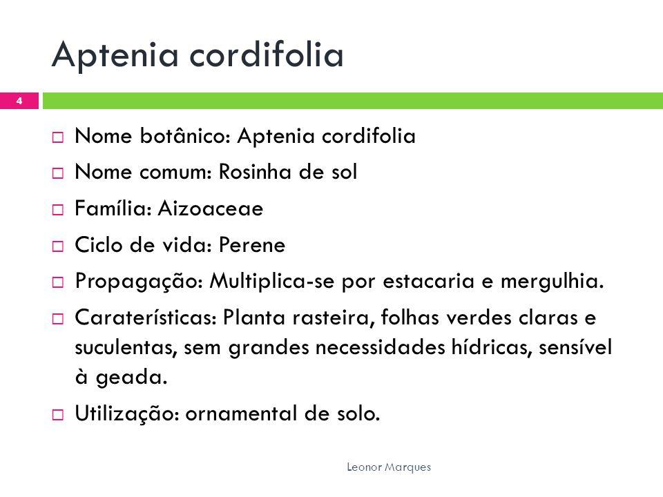 Aptenia cordifolia  Nome botânico: Aptenia cordifolia  Nome comum: Rosinha de sol  Família: Aizoaceae  Ciclo de vida: Perene  Propagação: Multiplica-se por estacaria e mergulhia.