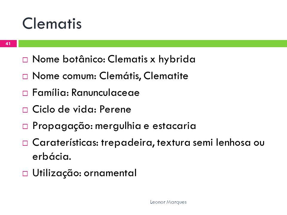 Clematis  Nome botânico: Clematis x hybrida  Nome comum: Clemátis, Clematite  Família: Ranunculaceae  Ciclo de vida: Perene  Propagação: mergulhia e estacaria  Caraterísticas: trepadeira, textura semi lenhosa ou erbácia.