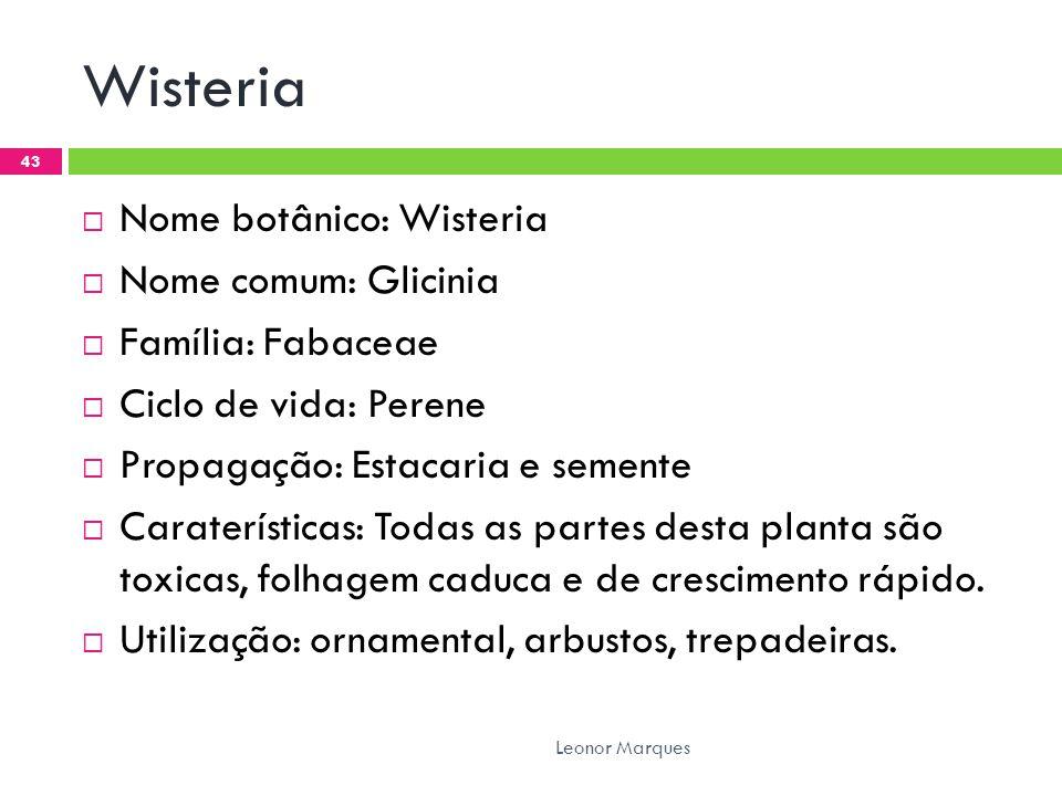 Wisteria  Nome botânico: Wisteria  Nome comum: Glicinia  Família: Fabaceae  Ciclo de vida: Perene  Propagação: Estacaria e semente  Caraterísticas: Todas as partes desta planta são toxicas, folhagem caduca e de crescimento rápido.
