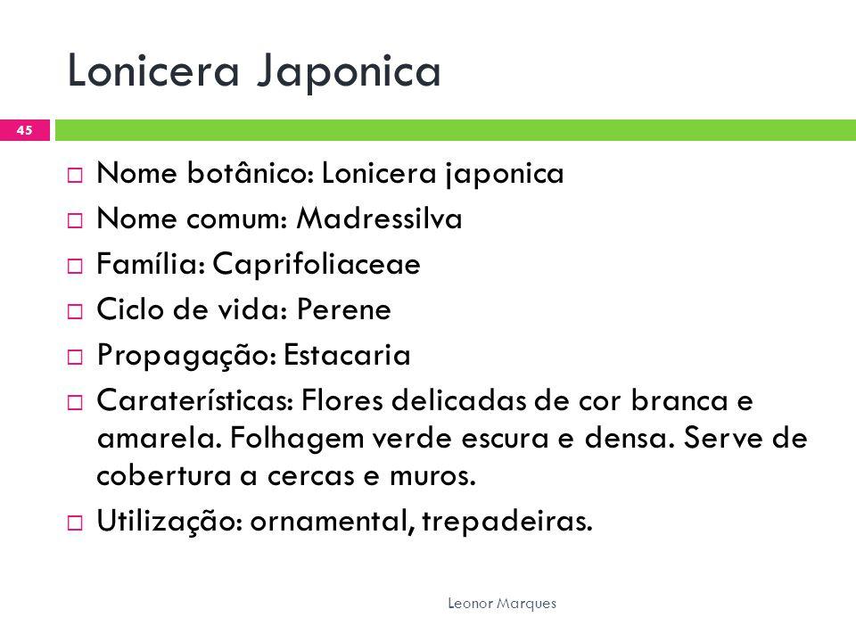 Lonicera Japonica  Nome botânico: Lonicera japonica  Nome comum: Madressilva  Família: Caprifoliaceae  Ciclo de vida: Perene  Propagação: Estacaria  Caraterísticas: Flores delicadas de cor branca e amarela.