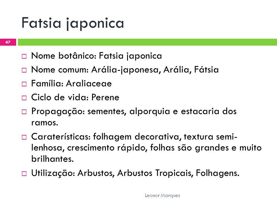Fatsia japonica  Nome botânico: Fatsia japonica  Nome comum: Arália-japonesa, Arália, Fátsia  Família: Araliaceae  Ciclo de vida: Perene  Propagação: sementes, alporquia e estacaria dos ramos.