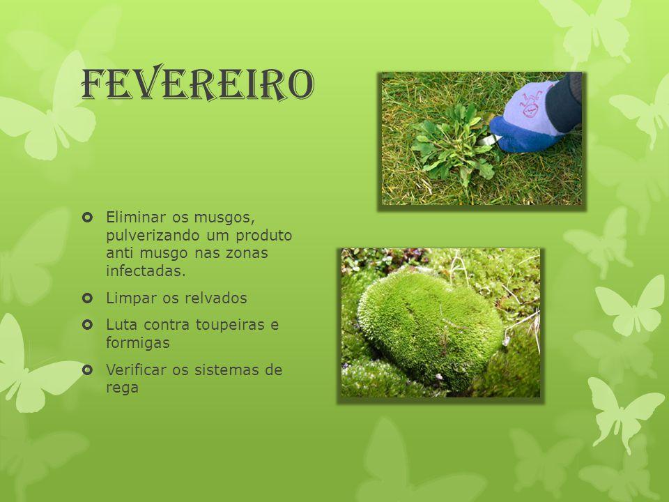 Fevereiro  Eliminar os musgos, pulverizando um produto anti musgo nas zonas infectadas.  Limpar os relvados  Luta contra toupeiras e formigas  Ver