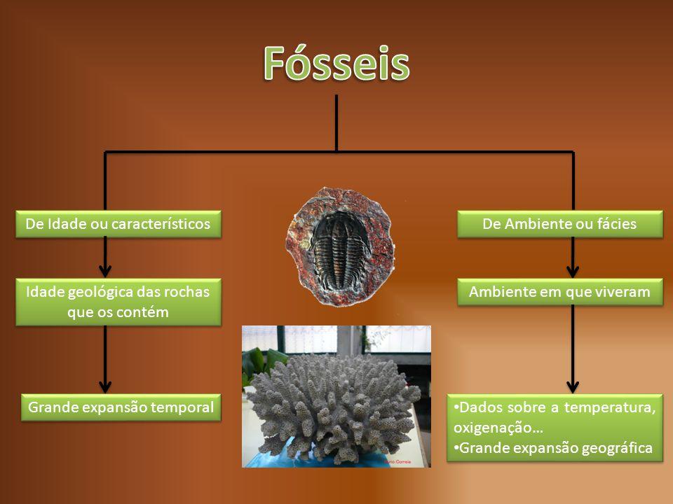 De Idade ou característicos De Ambiente ou fácies Idade geológica das rochas que os contém Ambiente em que viveram Grande expansão temporal Dados sobr