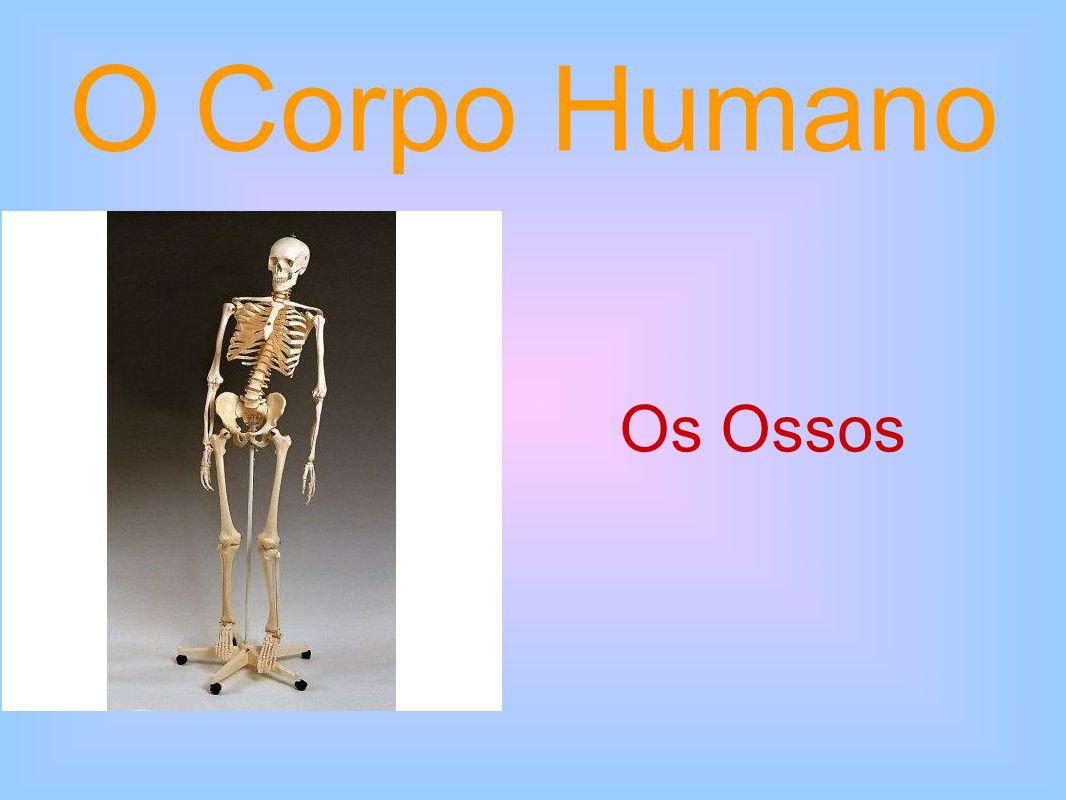 E por falar em ossos...Sabias que é preciso um batalhão deles para fazer um ser humano.