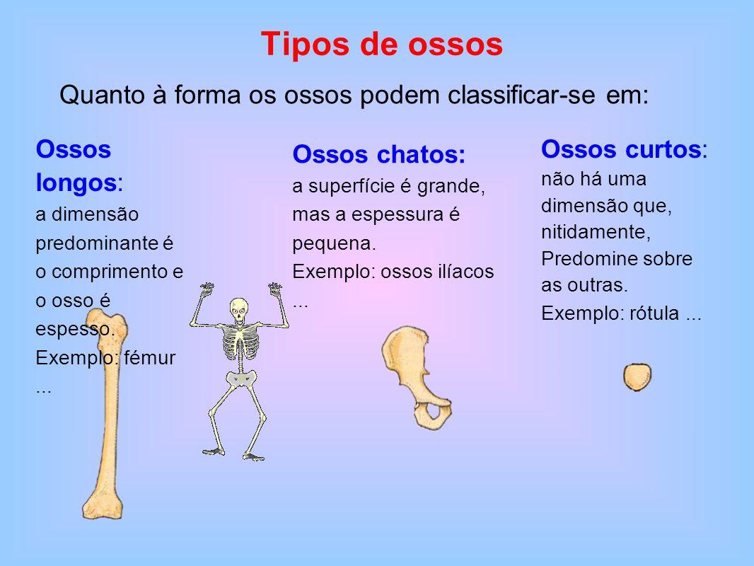 Tipos de ossos Quanto à forma os ossos podem classificar-se em: Ossos longos: a dimensão predominante é o comprimento e o osso é espesso. Exemplo: fém