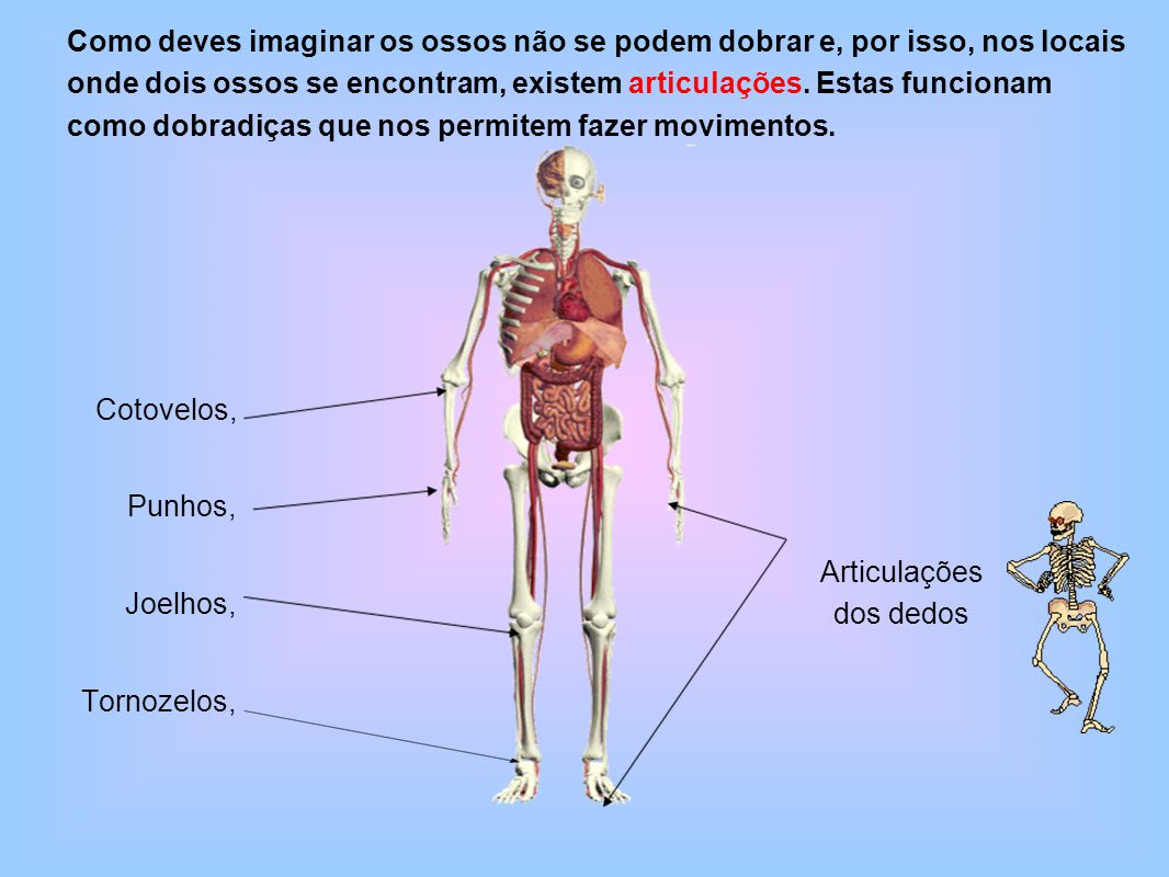 Cotovelos, Punhos, Joelhos, Tornozelos, Como deves imaginar os ossos não se podem dobrar e, por isso, nos locais onde dois ossos se encontram, existem