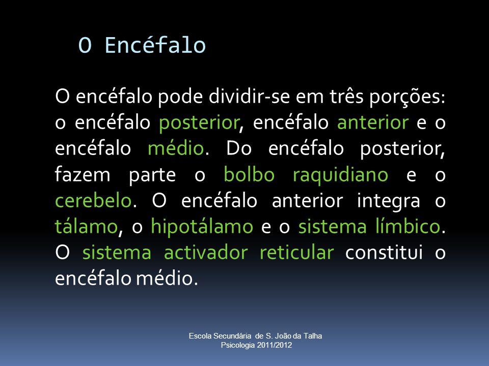 O Encéfalo O encéfalo pode dividir-se em três porções: o encéfalo posterior, encéfalo anterior e o encéfalo médio. Do encéfalo posterior, fazem parte