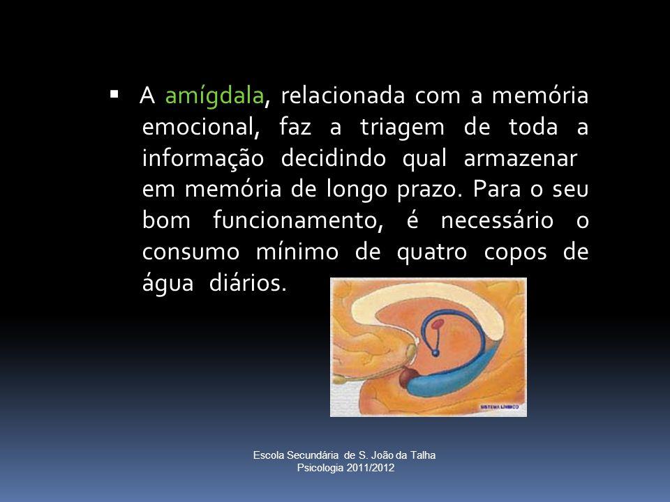  A amígdala, relacionada com a memória emocional, faz a triagem de toda a informação decidindo qual armazenar em memória de longo prazo. Para o seu b