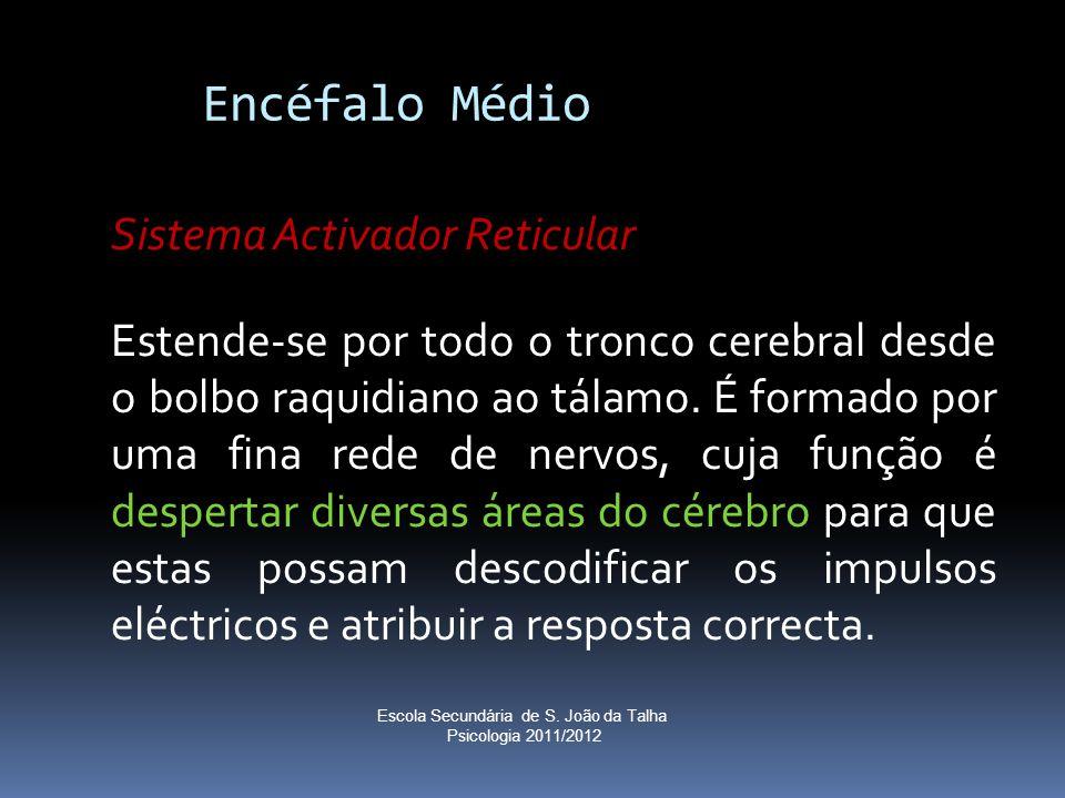 Encéfalo Médio Sistema Activador Reticular Estende-se por todo o tronco cerebral desde o bolbo raquidiano ao tálamo. É formado por uma fina rede de ne